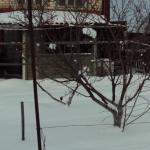 В зимнем саду